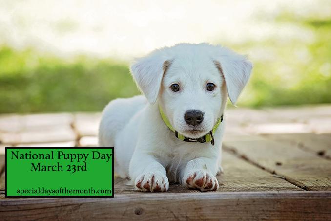 """""""adopt a puppy day"""""""